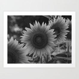 girasol (blanco y negro) Art Print
