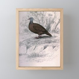 Ferruginous Ground Dove chaemepelia talpicoti8 Framed Mini Art Print
