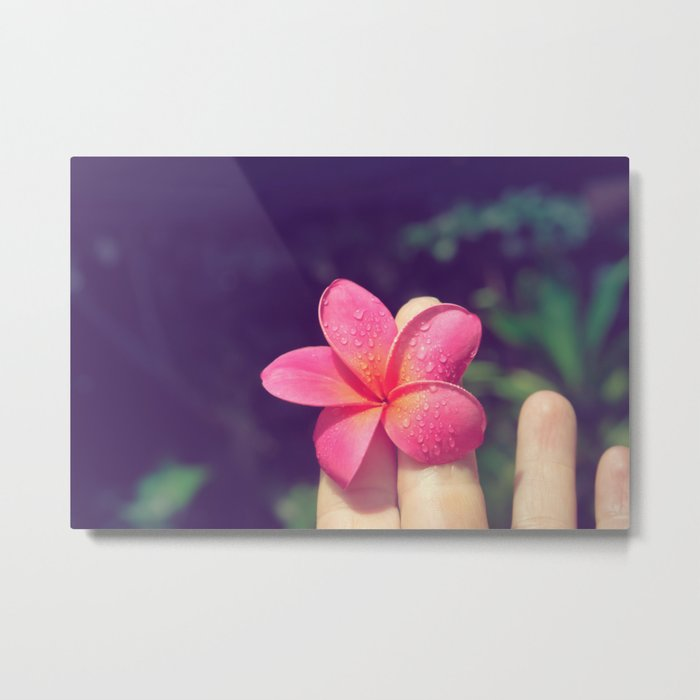 pua melia pink tropical plumeria hawaii Metal Print