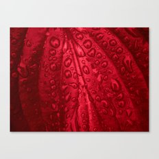 red passion I Canvas Print