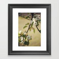 Pear Blossom Framed Art Print