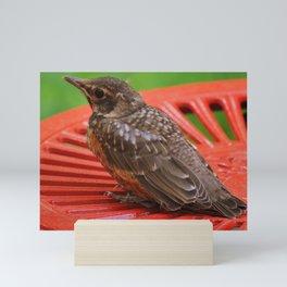 Bird sitting. Mini Art Print