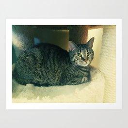 Tabby Kity Cat Rey Art Print