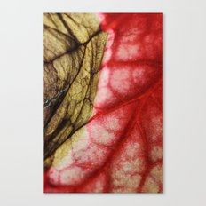 Decaying Begonia Rex Leaf Canvas Print