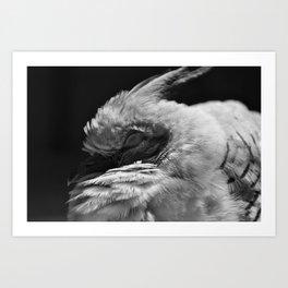 Baby Pigeon B&W Art Print