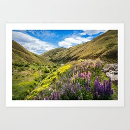 Lupines fields on the side of the road in New Zealand Art Print