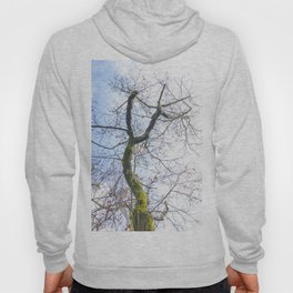 Old curved tree trunk Hoody