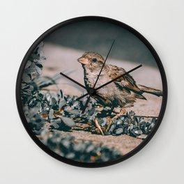 Summer Sparrow. Bird Photograph Wall Clock