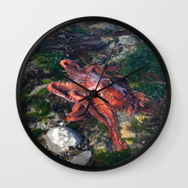 ALASKA: tidepool treasures ~ octopus Wall Clock