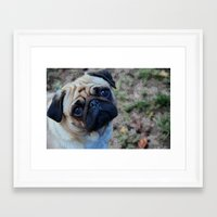 pug Framed Art Prints featuring Pug by Whimsy Notions Designs