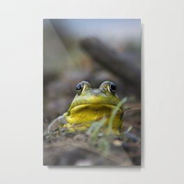 Northern Green Frog Metal Print