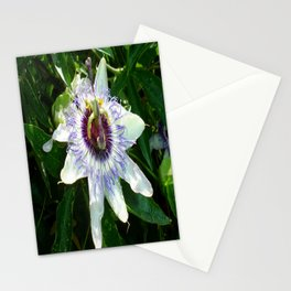 Beautiful Passion Flower With Garden Background  Stationery Cards