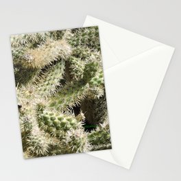 TEXTURES -- Munz's Cholla Stationery Cards