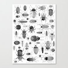 Ink Beetles Canvas Print