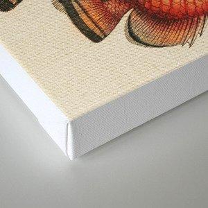 Fish Classic Designs 2 Canvas Print