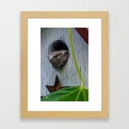 Funny tree frog in a birdhouse Framed Art Print