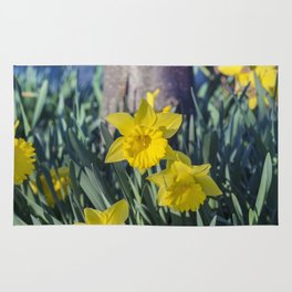 Yellow Daffodils Rug