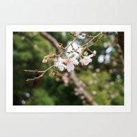 sakura Art Prints featuring sakura by artsimo