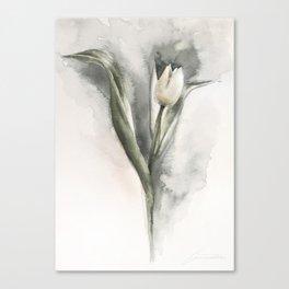 The tulip's shadow Canvas Print