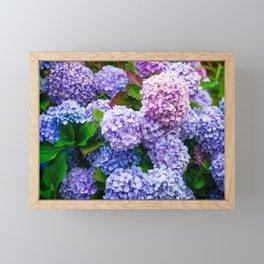 Purple Hydrangeas Framed Mini Art Print