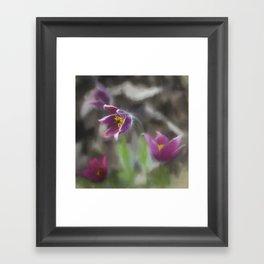 purple pasque flower Framed Art Print