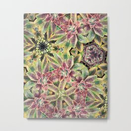 Green and Pink Succulent Metal Print