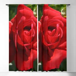 Beautiful Climbing Red Rose Close Up Photograph Blackout Curtain