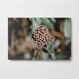 Baby Flower Buds Metal Print