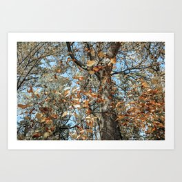 Autumn Scenes IV Art Print