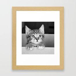 Kitten in a box Framed Art Print
