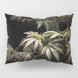 Shining in Black Pillow Sham