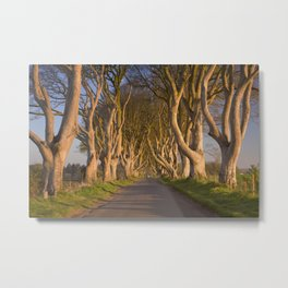 Old trees at the Dark Hedges in Northern Ireland Metal Print