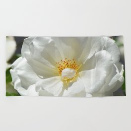 White Rose In Full Sun Beach Towel