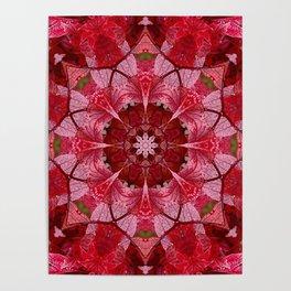 Cranberrybush Viburnum mandala Poster