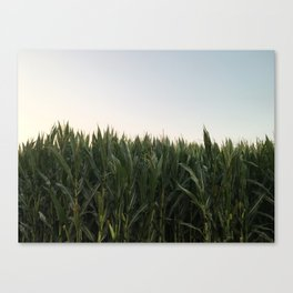 California Corn Canvas Print