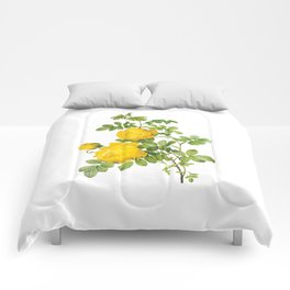 Vintage Yellow Roses [09] Comforters