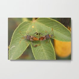 Two Leaf Footed Bugs on a Leaf Metal Print