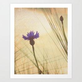 FLOWER Bluebottle Art Print