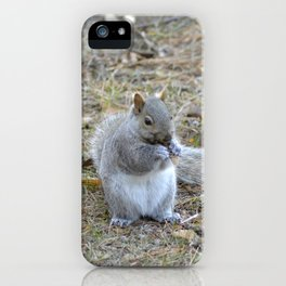 Gray Squirrel Munching on Pine Cones iPhone Case