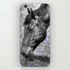 Horse & Bluebonnets iPhone Skin
