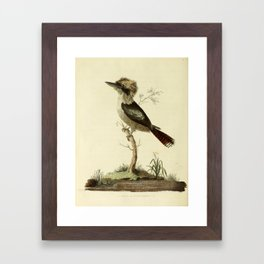 """""""Great Brown King's Fisher"""" by Sarah Stone, 1790 Framed Art Print"""