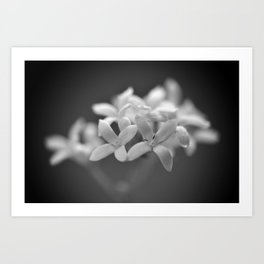 Flower No.12 Art Print