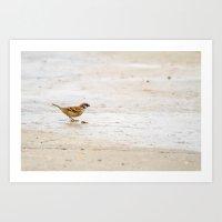 sparrow Art Prints featuring sparrow by Marcel Derweduwen
