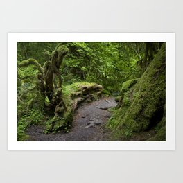 forest growth Art Print