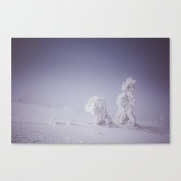 Snowy creatures - Landscape and Nature Photography Canvas Print