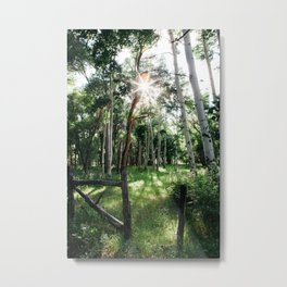 Sunshine through the trees Metal Print