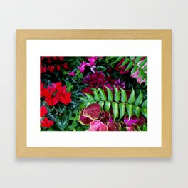 Red Pink Cyclamen and Coleus Flowers Framed Art Print