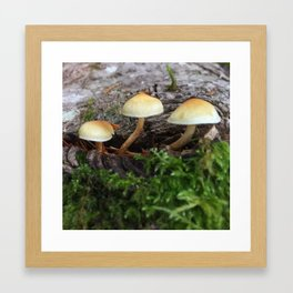 Forest Mushrooms Framed Art Print