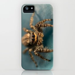 Small jumping spider iPhone Case
