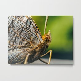 Brown Monarch Butterfly, Macro Photography, Large Printable Photography, Wall Art Print, Nature Metal Print